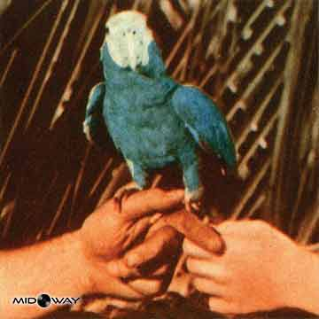 Andrew Bird | Are You Serious